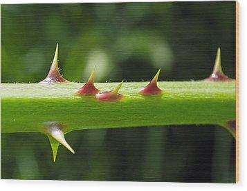 Blackberry Thorns Wood Print by Tikvah's Hope