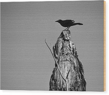 Blackbird Wood Print by David Mckinney
