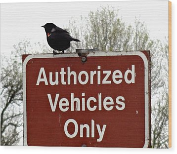 Blackbird On Patrol Wood Print by Lizbeth Bostrom