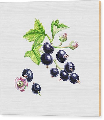 Wood Print featuring the painting Blackcurrant Botanical Study by Irina Sztukowski