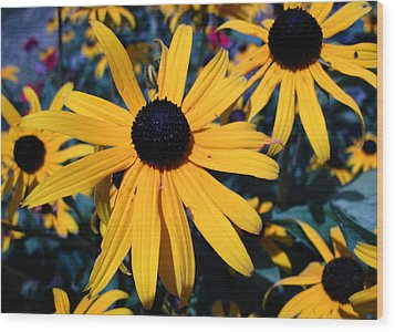 Wood Print featuring the photograph Blackeyed Susan Abstract by Mary Bedy