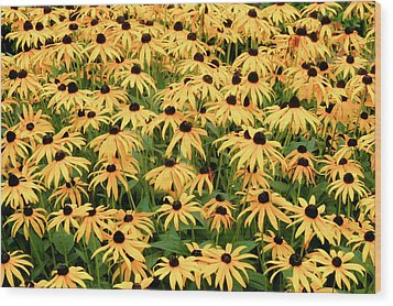 Wood Print featuring the photograph Blackeyed Susan by Geraldine Alexander