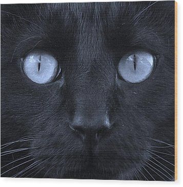 Blackie Blue Wood Print by Elizabeth Sullivan