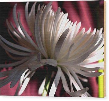 Blanche 94 Wood Print by Gilda Pontbriand