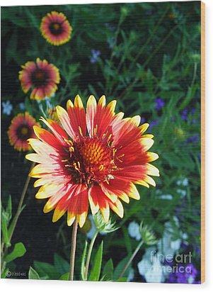 Blanket Flower Wood Print by Lizi Beard-Ward