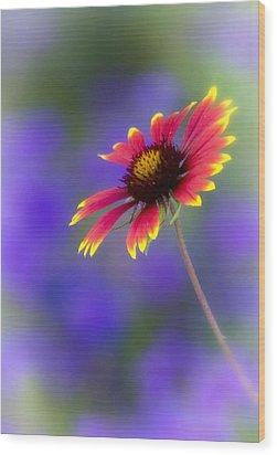 Blanket Flower  Wood Print by Saija  Lehtonen