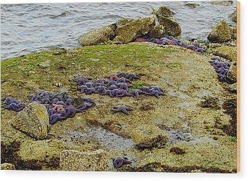 Wood Print featuring the photograph Blanket Of Seastars by Karen Molenaar Terrell