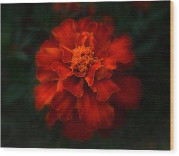 Blazing Marigold Wood Print