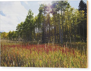 Blazing Red Grass In Colorado Wood Print