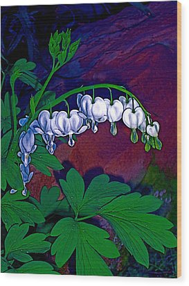Bleeding Heart 1 Wood Print