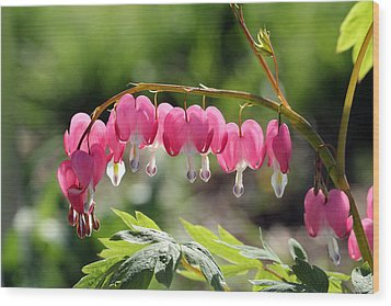 Bleeding Heart Flower Wood Print by James Hammen
