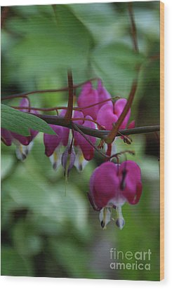 Bleeding Heart Wood Print by Linda Shafer