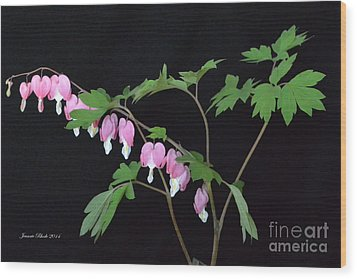 Wood Print featuring the photograph Bleeding Hearts 2 by Jeannie Rhode