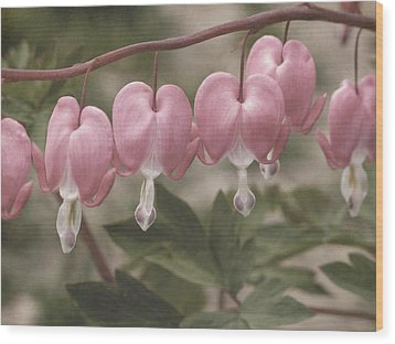 Bleeding Hearts Composite Wood Print by Steve Gravano