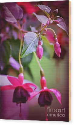 Bleeding Hearts Wood Print