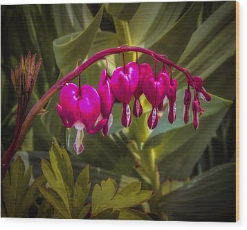 Bleeding Hearts Wood Print by Jill Balsam