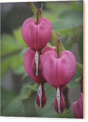Bleeding Hearts Wood Print by Joseph Skompski