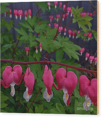 Bleeding Hearts Wood Print by Laura  Wong-Rose