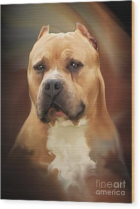 Blond Pit Bull By Spano Wood Print by Michael Spano