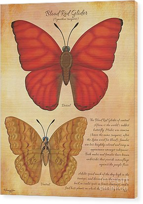 Blood Red Glider Butterfly Wood Print by Tammy Yee