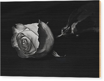 Bloodless Rose Wood Print