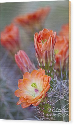 Wood Print featuring the photograph Bloom In Orange by Bryan Keil