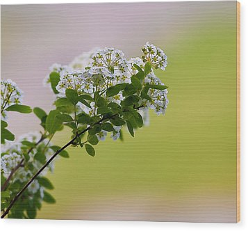 Bloom Wood Print by Joe Scott