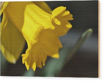 Bloom Wood Print by Thomas  MacPherson Jr