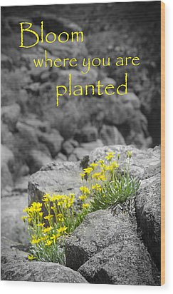 Bloom Where You Are Planted Wood Print by Debbie Karnes