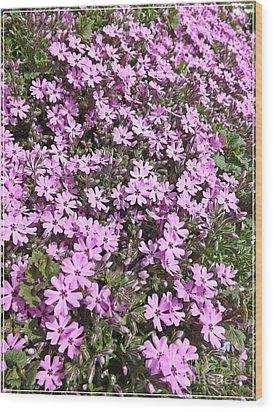 Bloomin Like Mad Wood Print by Sara  Raber
