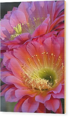 Bloomin' Twins Wood Print by Cindy McDaniel
