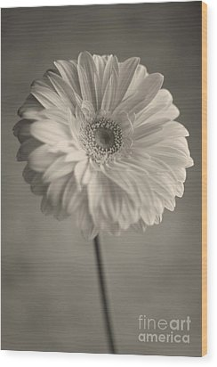 Wood Print featuring the photograph Blooming by Aiolos Greek Collections