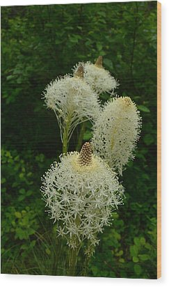 Blooming Bear Grass Wood Print