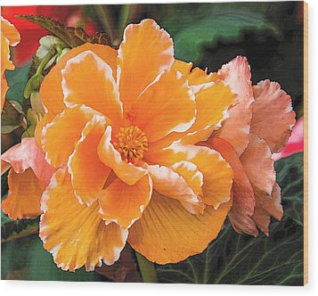 Blooming Begonia Image 1 Wood Print