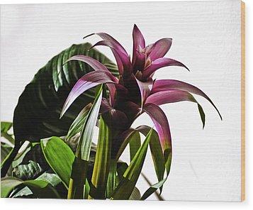 Blooming Bromeliad Wood Print by Christi Kraft