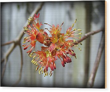 Wood Print featuring the photograph Blooming Buds by Kelly Nowak
