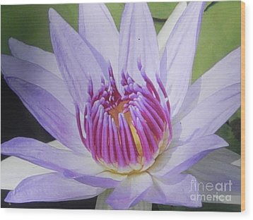 Wood Print featuring the photograph Blooming For You by Chrisann Ellis