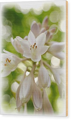 Blooming Hosta Wood Print