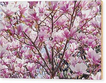 Blooming Magnolia Wood Print by Elena Elisseeva