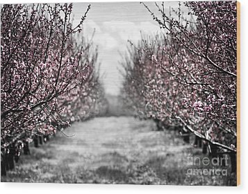 Blooming Peach Orchard Wood Print