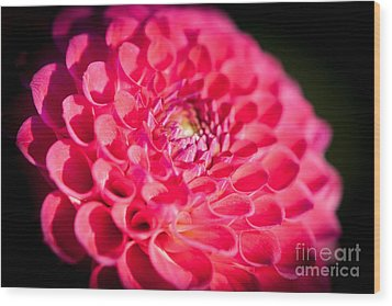 Blooming Red Flower Wood Print