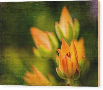 Blooming Succulents IIi Wood Print