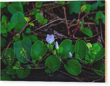 Blooming Vine Wood Print