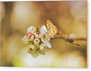 Blooms And Butterflies Wood Print by Darren Fisher
