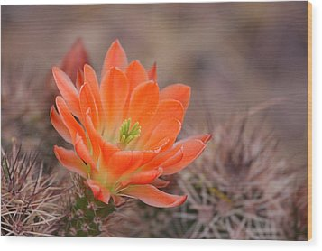 Wood Print featuring the photograph Blooms In Orange by Ruth Jolly