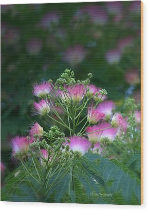 Blooms Of The Mimosa Tree Wood Print