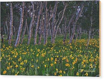 Bloooming Aspens Wood Print