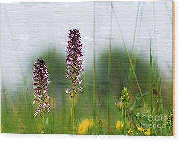 Wood Print featuring the photograph Blossom Among Grass Straws by Kennerth and Birgitta Kullman