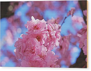 Blossom Flowers Trees Art Prints Wood Print by Baslee Troutman