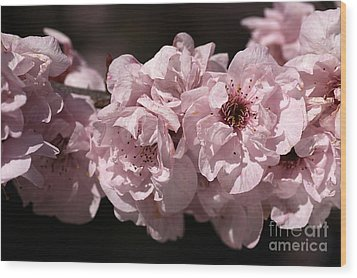 Blossom In Pink Wood Print by Joy Watson